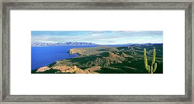 Lone Cardon Cactus Pachycereus Pringlei Framed Print by Panoramic Images