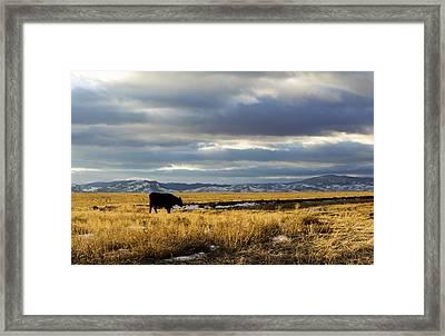 Lone Cow Against A Stormy Montana Sky. Framed Print by Dana Moyer