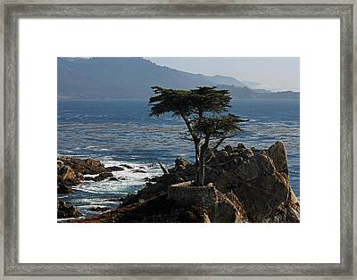 Lone Cypress - Big Sur II Framed Print