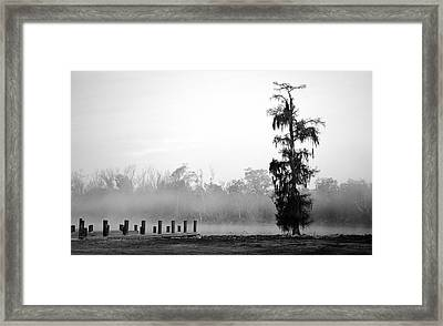 Lone Cypress Framed Print by Chris Pietraroia