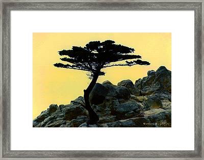 Lone Cypress Companion Framed Print