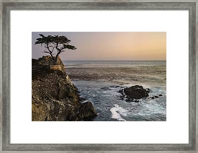 Framed Print featuring the photograph Big Sur - Lone Cypress by Francesco Emanuele Carucci