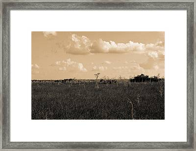 Framed Print featuring the photograph Lone Cypress by Gary Dean Mercer Clark