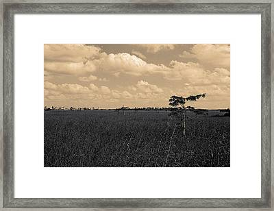 Framed Print featuring the photograph Lone Cypress II by Gary Dean Mercer Clark
