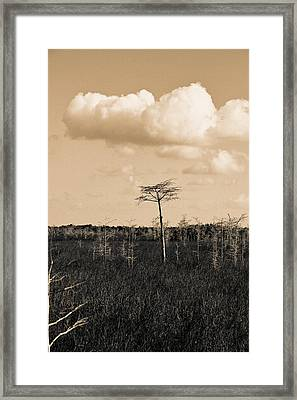 Framed Print featuring the photograph lone cypress III by Gary Dean Mercer Clark