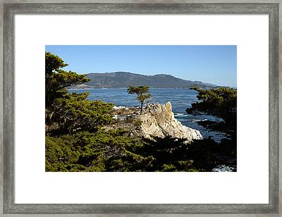 Lone Cypress On 17-mile Drive  Framed Print