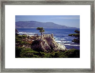 Lone Cypress Framed Print by Rod Jones