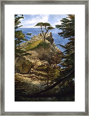 Lone Cypress Framed Print by Tom Wooldridge