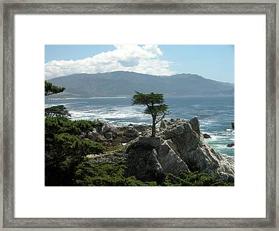 Lone Cyprus 1045 Framed Print by Guy Whiteley