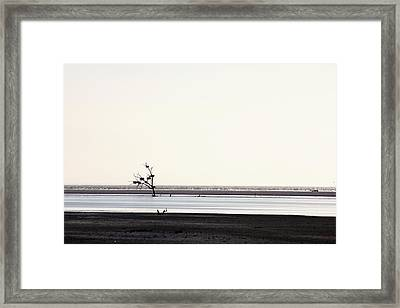 Lone Dead Tree Sustains Nests Of New Life Framed Print