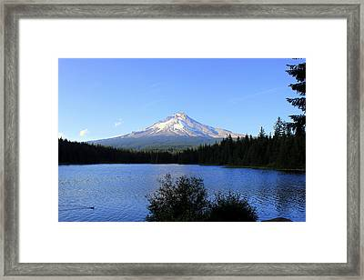 Lone Duck Framed Print