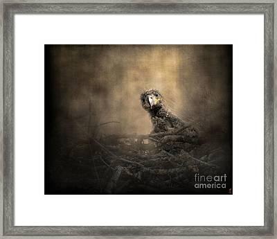 Lone Eaglet In The Nest Framed Print