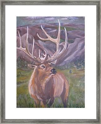 Lone Elk Framed Print by Caroline Owen-Doar