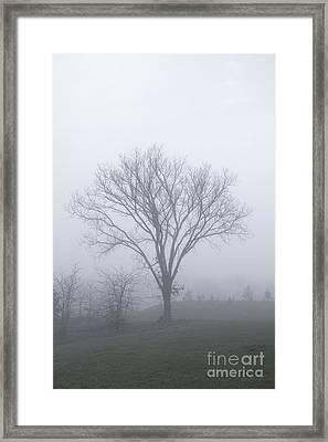 Lone Elm In Fog Framed Print by Kay Pickens