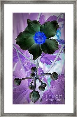 Lone Flower 1 Framed Print