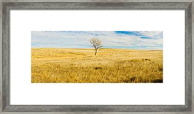 Lone Hackberry Tree In Autumn Plains Framed Print by Panoramic Images