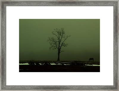 Lone Horse Framed Print by Andrea Galiffi