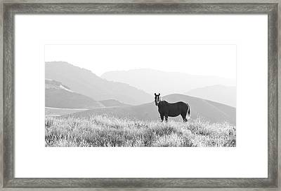 Lone Horse Framed Print by B Christopher