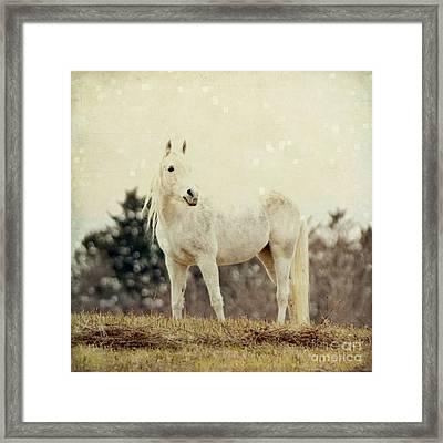 Lone Horse Framed Print by Diane Miller