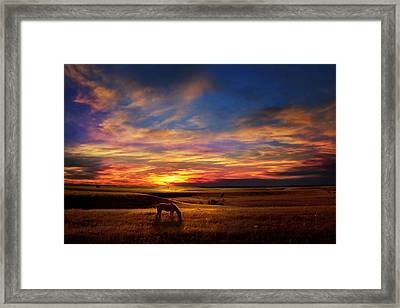 Lone Horse Greenwood County Framed Print