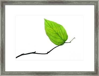 Lone Leaf Large Framed Print by Dan Holm