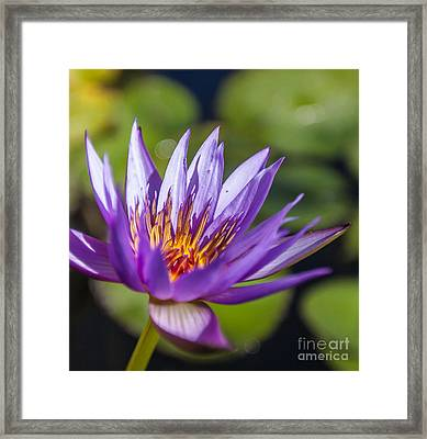 Lone Lilly Framed Print