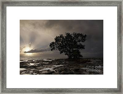 Lone Mangrove Framed Print by Keith Kapple