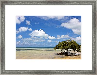 Lone Mangrove Tree Florida Keys Framed Print