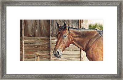 Lone Mare Framed Print by Brent Schreiber