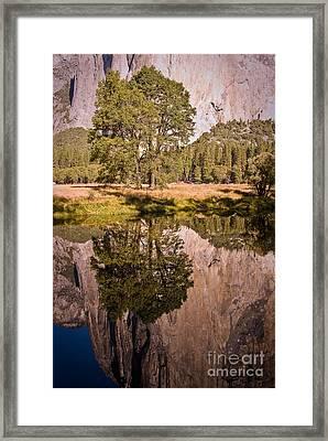 Lone Oak And El Capitan In Yosemite Framed Print