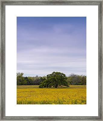 Lone Oak In A Field Of Phlox - Industry Texas Framed Print by Silvio Ligutti