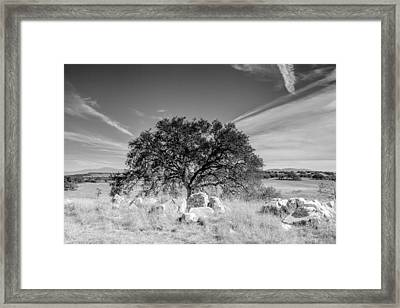 Framed Print featuring the photograph Lone Oak by Robert  Aycock
