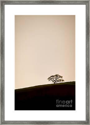 Lone Oak Tree Framed Print by Holly Martin