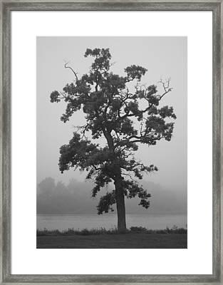 Framed Print featuring the photograph Lone Oak by Viviana  Nadowski