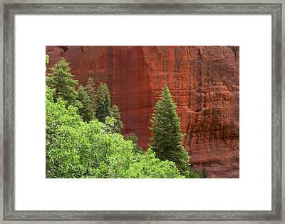 Lone Pine At Kolab Framed Print