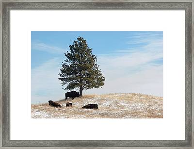 Lone Pine Framed Print