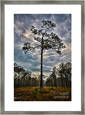 Lone Pine Framed Print by Henry Kowalski