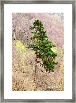 Framed Print featuring the photograph Lone Pine by Les Palenik