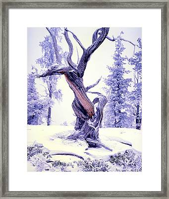 Lone Pine Framed Print by Ray Mathis