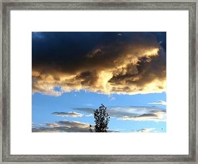 Lone Poplar At Sunset Framed Print