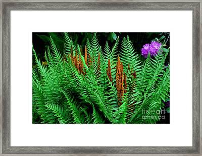 Lone Purple Framed Print by Stuart Mcdaniel