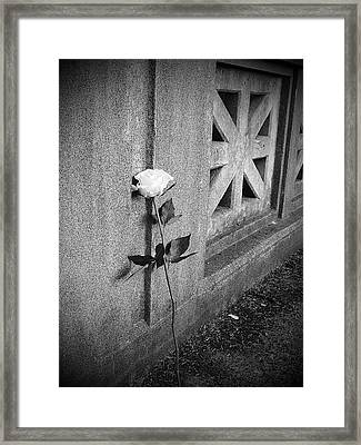 Lone Rose Framed Print by HW Kateley