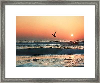 Lone Seagull Sunset Flight Framed Print