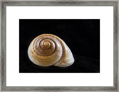 Lone Shell Framed Print by Jean Noren