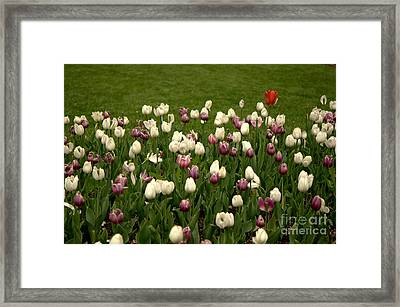Lone Soldier Framed Print