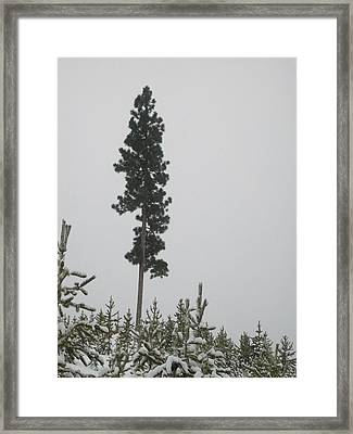 Framed Print featuring the photograph Lone Survivor by Jewel Hengen