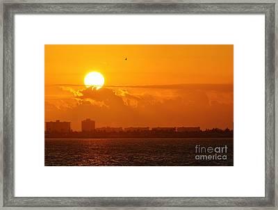 Lone Tern At Sunrise Framed Print by Lynda Dawson-Youngclaus