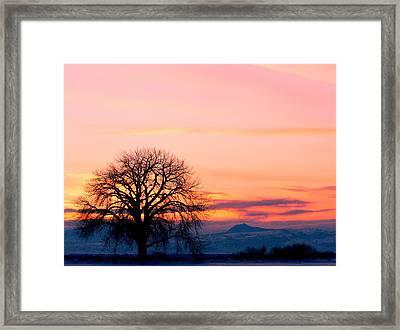 Lone Tree 1 Framed Print by Rebecca Adams