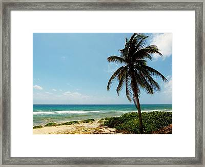 Framed Print featuring the photograph Lone Tree by Amar Sheow
