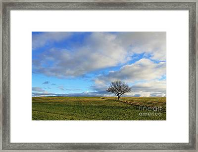 Lone Tree At Epsom Downs Uk Framed Print